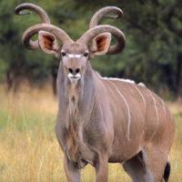 Thaba'Nkwe Kudu Chalet