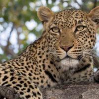 Thaba'Nkwe Leopard Cabin