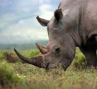 Thaba'Nkwe Bushveld Inn Rhino Cabin